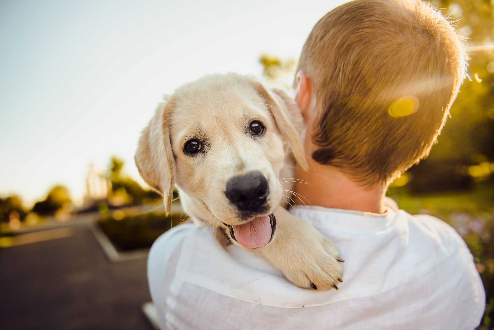 Top 9 Tips For First Time Dog Owners