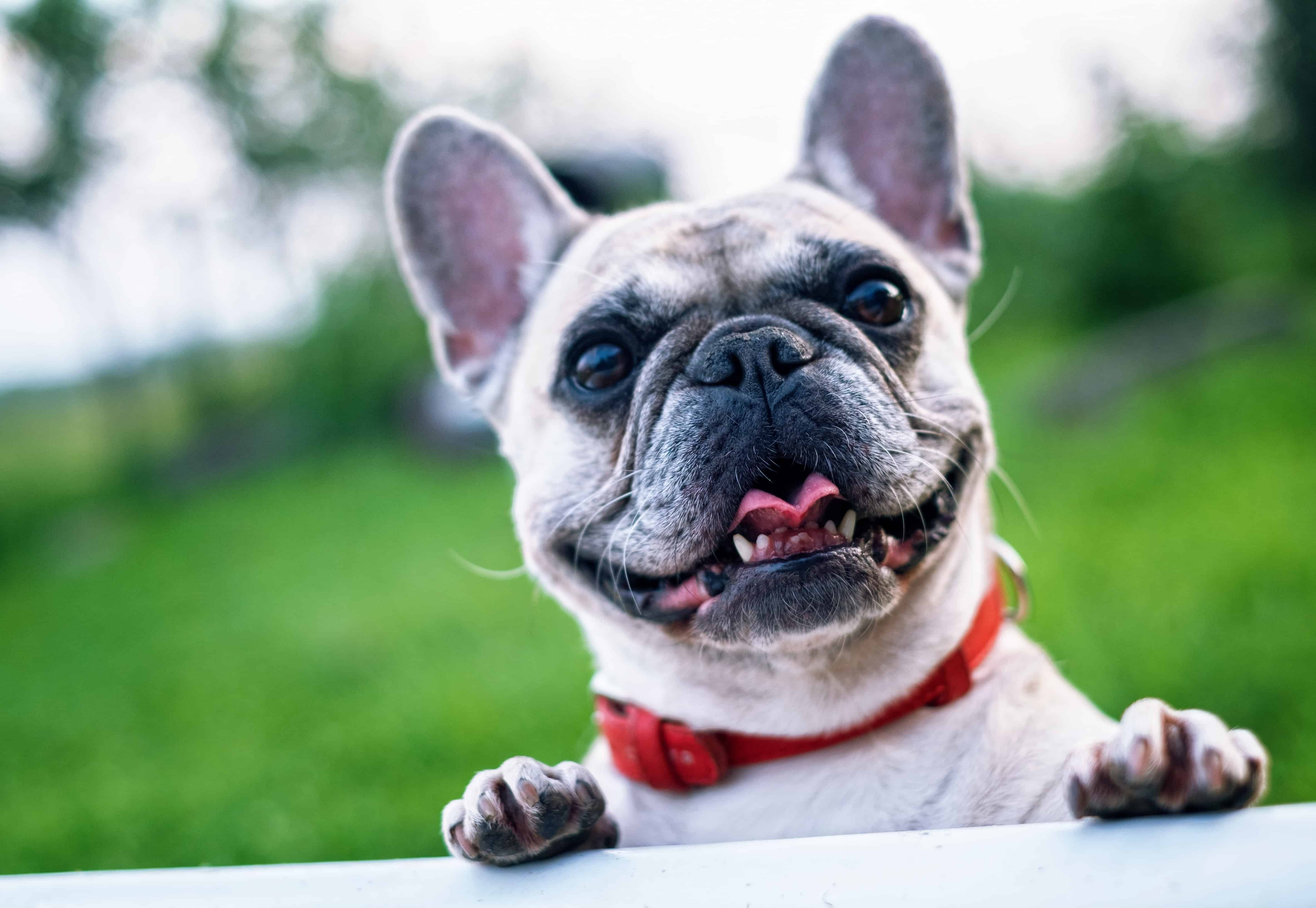Dog Poops A Lot: Why It Happens And What You Can Do To Solve It