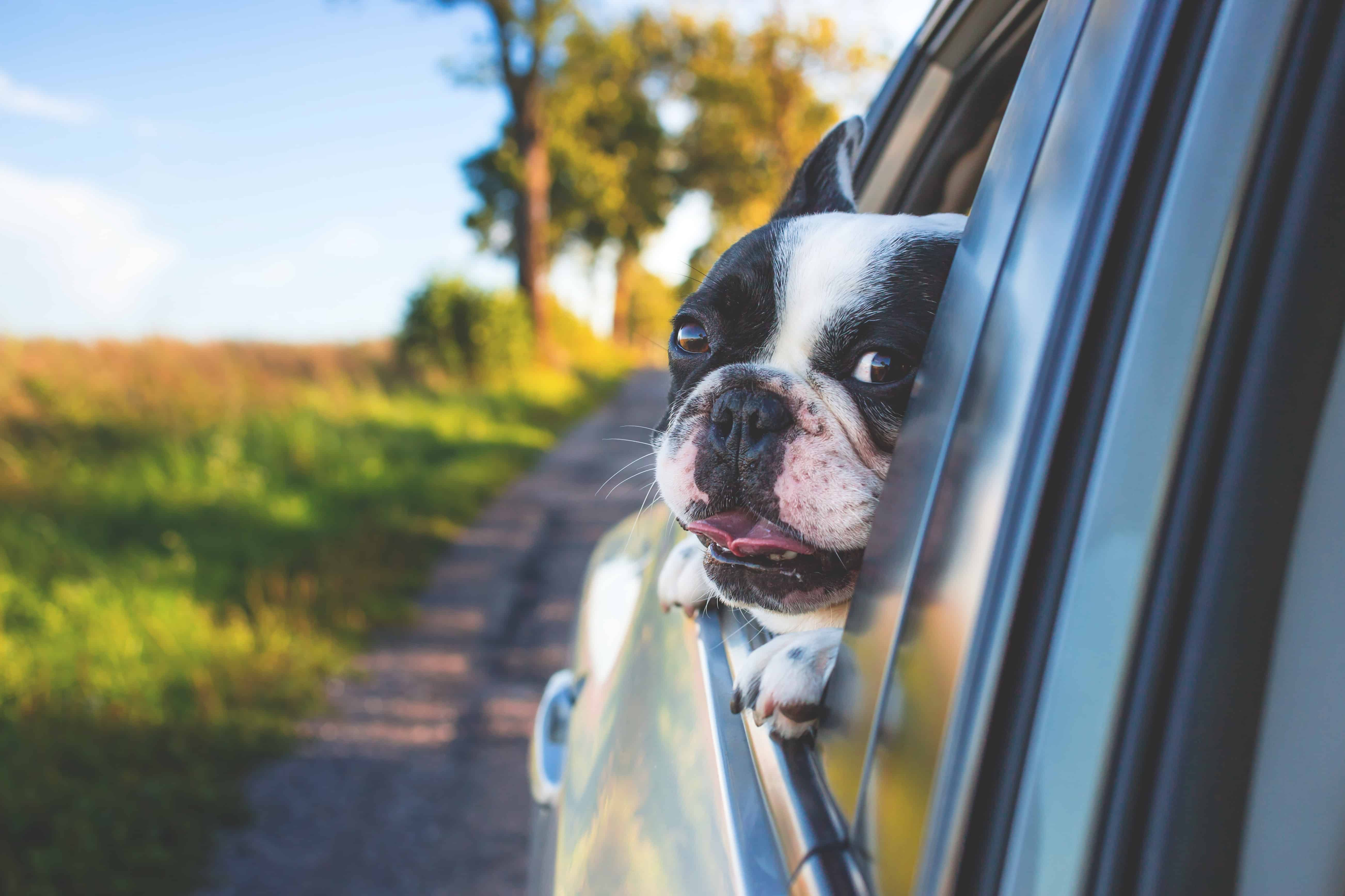 How To Travel With A Dog The Safest Way Possible