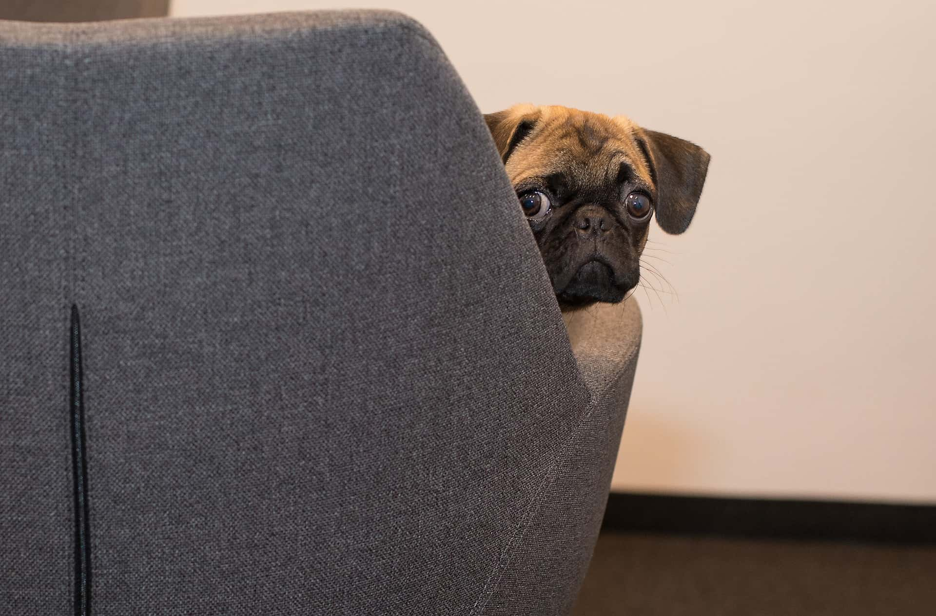 Dogs Fart: Here's What You Need To Know About Dogs Fart