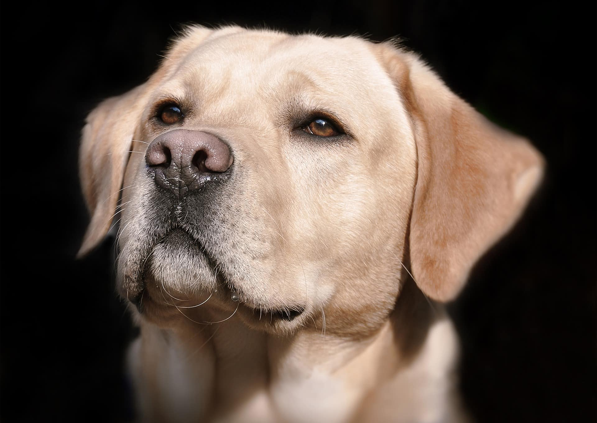 Runny Nose In Dog: Common Causes, Treatment, And Care