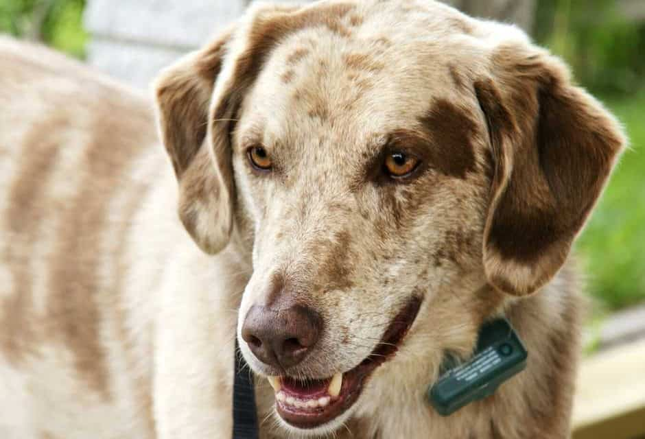 7 Best Shock Collars For Dogs: 2021 Buyer's Guide