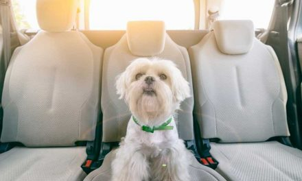 9 Best Dog Car Harnesses: 2020 Buyer's Guide