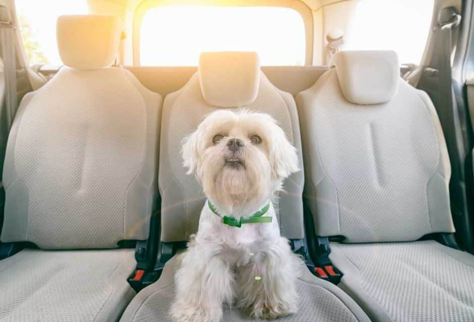 10 Best Dog Car Harnesses: 2020 Buyer's Guide
