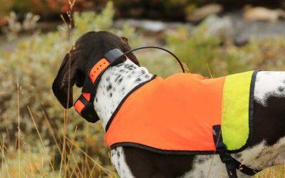 7 Best Dog GPS Collars: 2020 Buyer's Guide