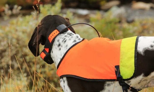 7 Best Dog GPS Collars: 2021 Buyer's Guide