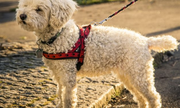 10 Most Comfortable Dog Harnesses: 2020 Buyer's Guide