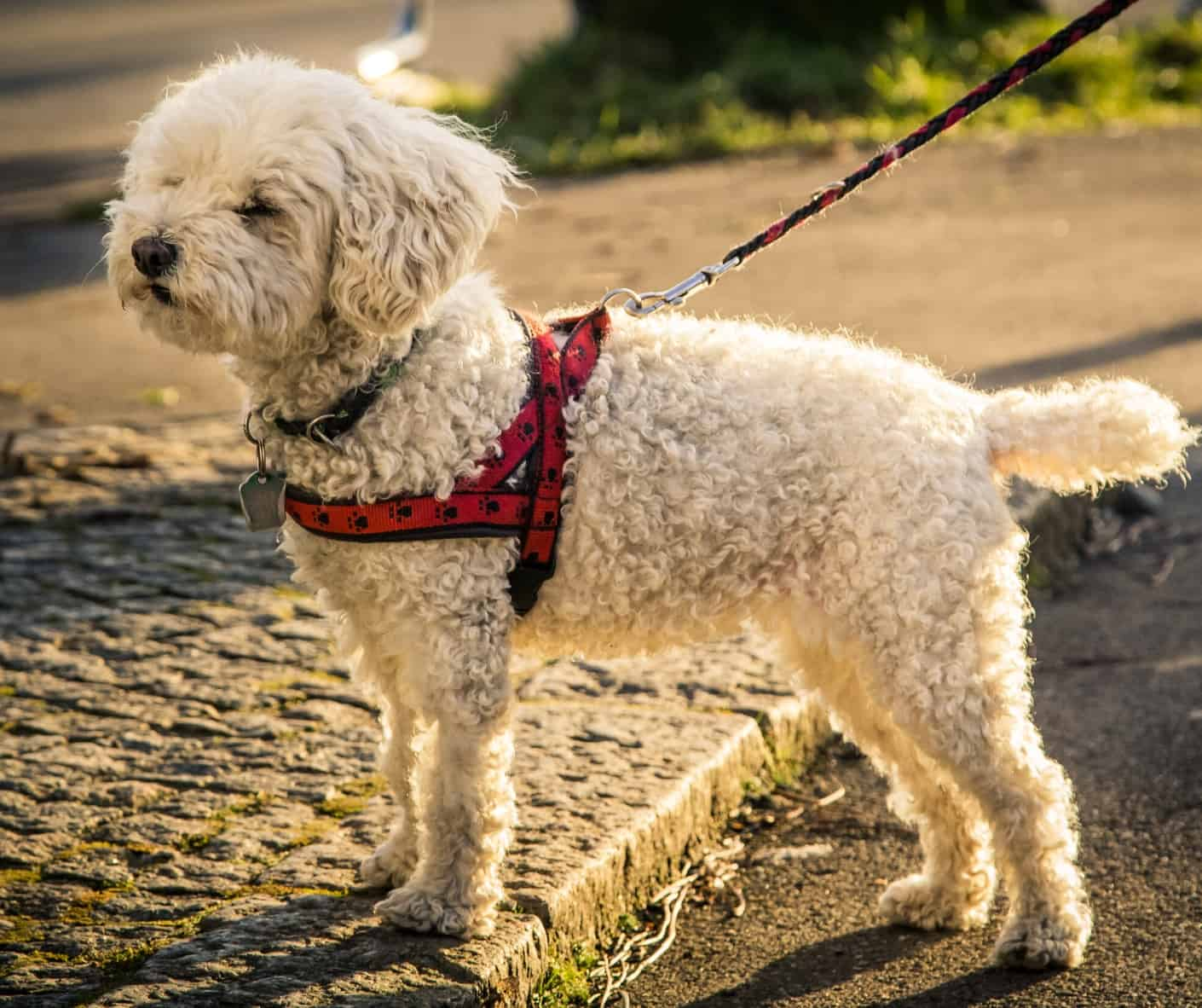 10 Most Comfortable Dog Harnesses  2020 Buyer U0026 39 S Guide