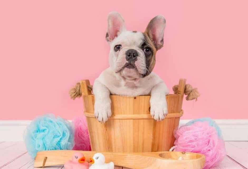 7 Best Harnesses For French Bulldogs: 2020 Buyer's Guide