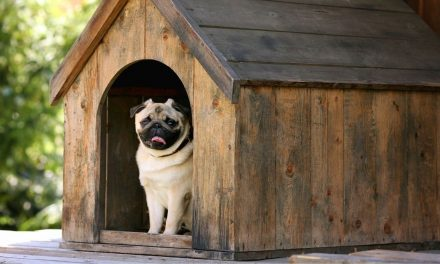 9‌ ‌Best‌ Dog Houses of 2020 (Reviews & Buying Guide)