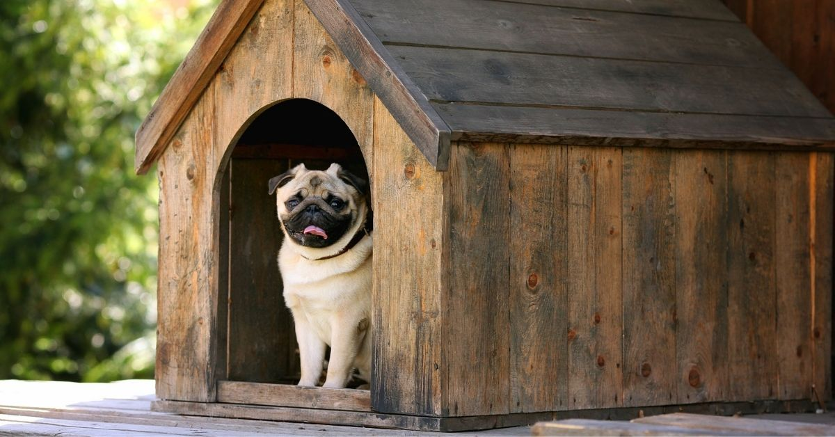 9 Best Dog Houses of 2021 (Reviews & Buying Guide)
