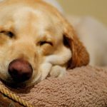 7 Best Hypoallergenic Dog Beds (Help Relieve Allergy)