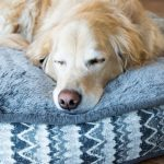 9 Best Waterproof Dog Beds of 2020