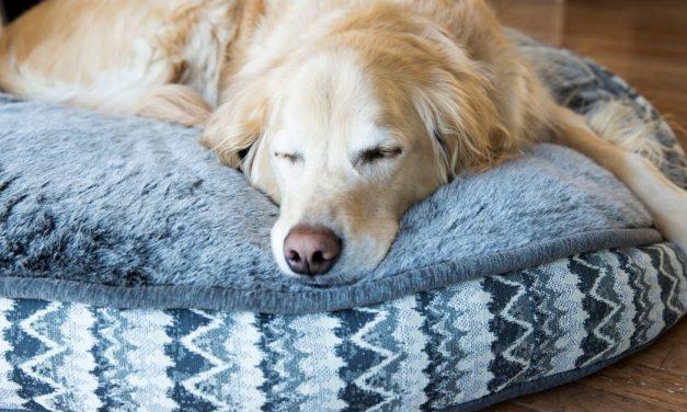 9 Best Waterproof Dog Beds of 2020