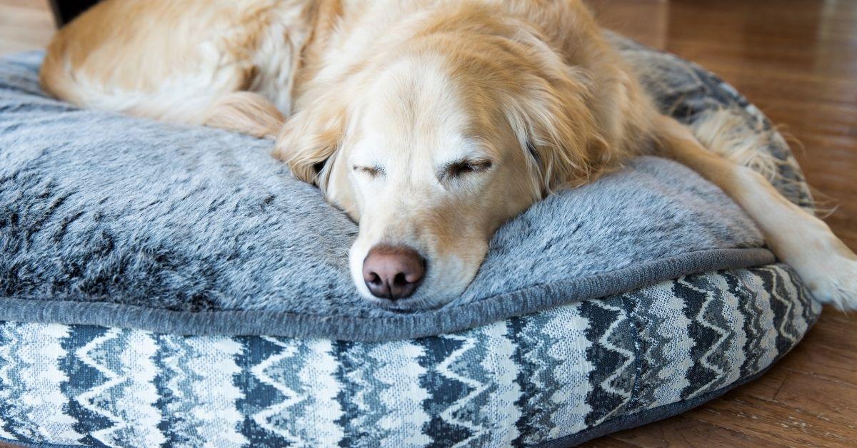 9 Best Waterproof Dog Beds of 2021