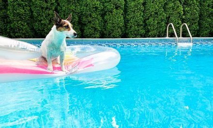 9 Best Dog Pool Floats of 2021 (Ultimate Buying Guide)