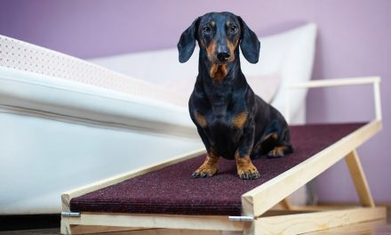 7 Best Dog Ramps for Beds in 2021