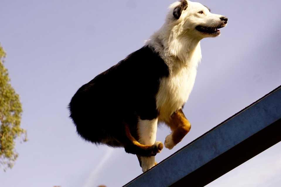 dog boat ramp