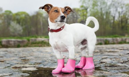 Best Dog Water Shoes in 2021 (Buying Guide)