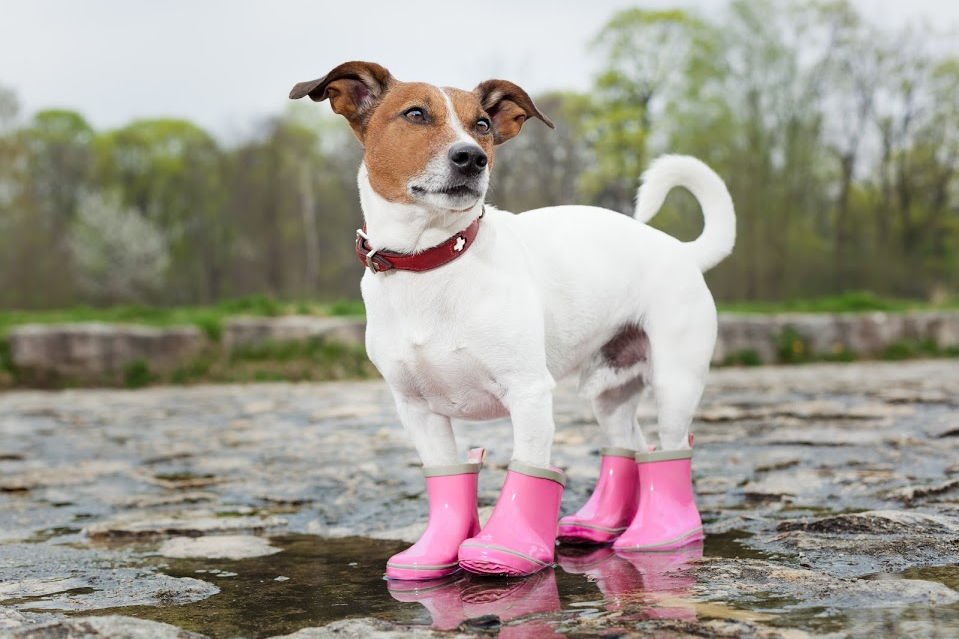 dog water shoes