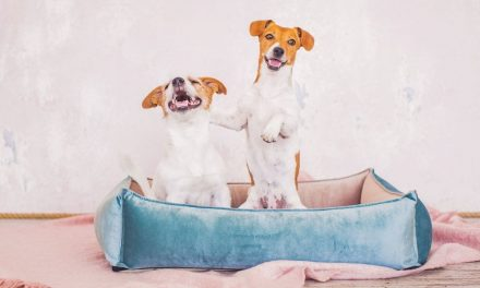 Best Indestructible Dog Beds in 2021 (Buyer's Guide)