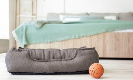 Best Eco-Friendly Dog Beds 2021 (Sustainably Made)