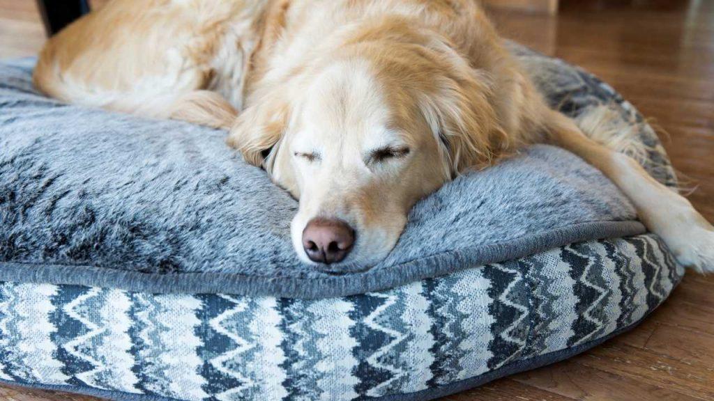 best dog bed for hip dysplasia