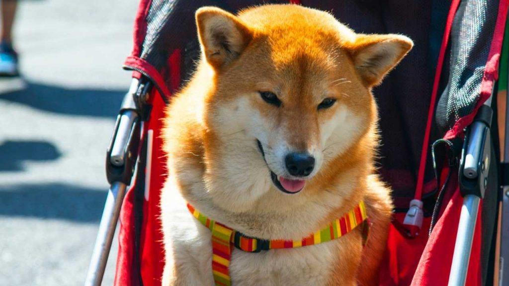 best dog stroller for large dog
