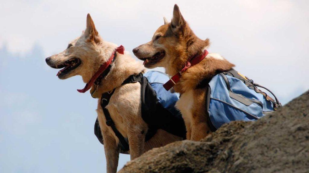 best dog saddle bags