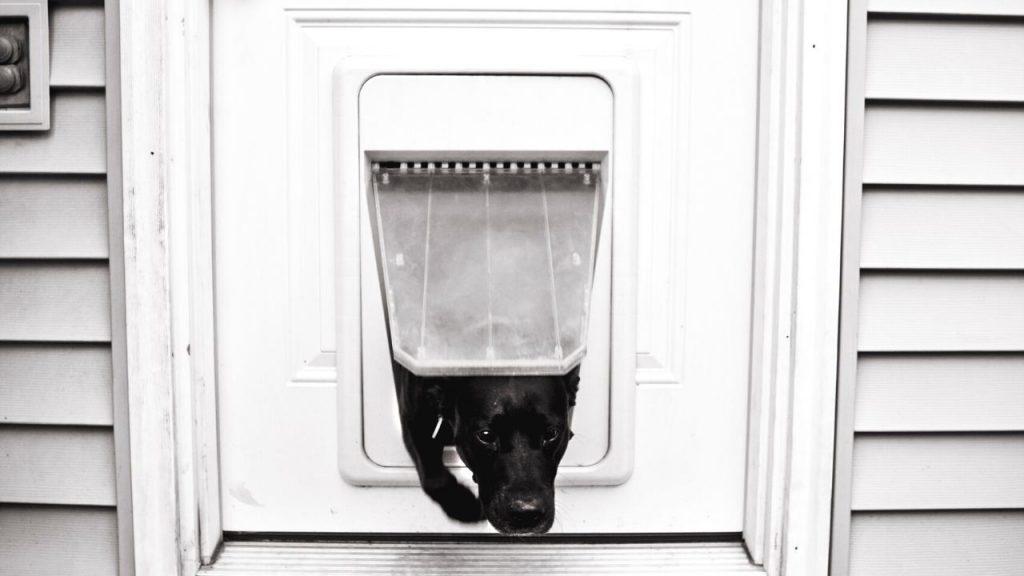 best electronic dog door