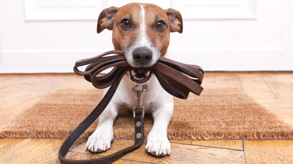 best leather dog leash