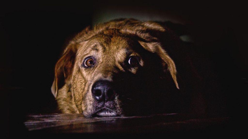 best thundershirt for dogs
